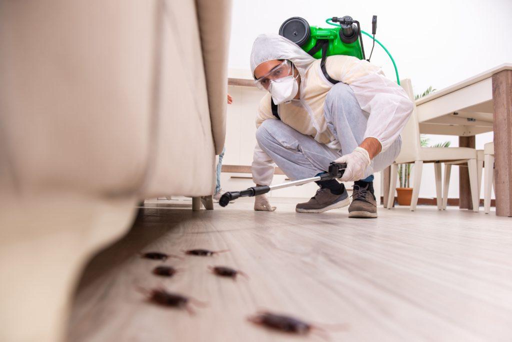 Foto de Profesional de control de plagas eliminando una plaga de